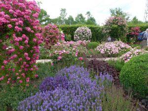 Rosengarten im Garten der Sinne, Foto Klemens Grätz