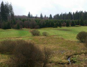 Narzissenwiesen im Oleftal, Foto von Kasimir Kinder (4)