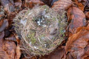 Nest von einer Meise