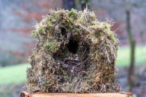 Nest einer Wasseramsel